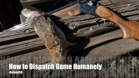 How to Dispatch Small Game – Quick Tips