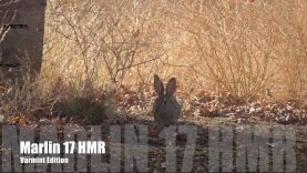 Hunting With The Marlin .17 HMR