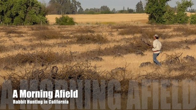 Rabbit Hunting – A Day Afield