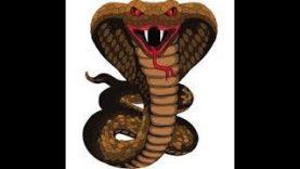 The Cobra
