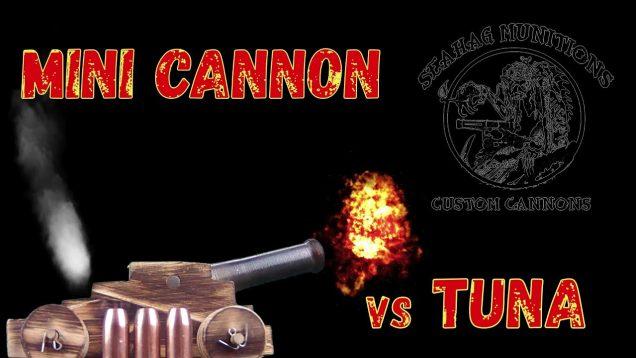 Sea Dog vs Tuna
